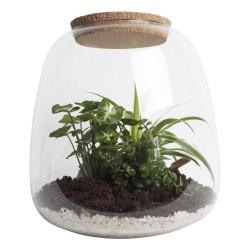 DeBlock Ecosysteem Dragon Tail met glazen pot - 25 cm