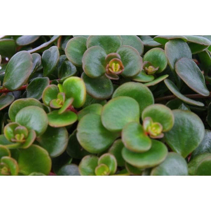 DeBlock Plant Puzzel Discover the World Ecosysteem met verlichting - 25 cm