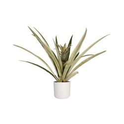 Deblock Decorum Ananasplant Champaca met Elho pot wit - 55 cm
