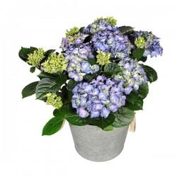 DeBlock Decorum Hydrangea bol Blauw kop in Zink old look - 40 cm
