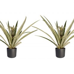DeBlock Decorum Duo 2x Ananas Champaca met Elho sierpot antracite - 55 cm