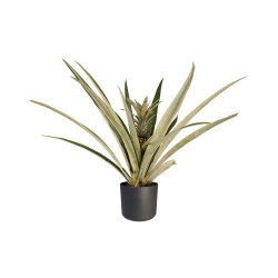 DeBlock Decorum Ananasplant Champaca met Elho pot antracite - 55 cm
