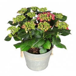 DeBlock Decorum Hydrangea Bol Rood in Zink old look emmer - Hortensia 40 cm